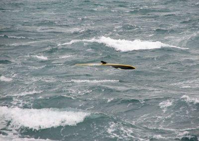 kayak-13