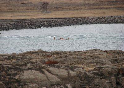 kayak-17